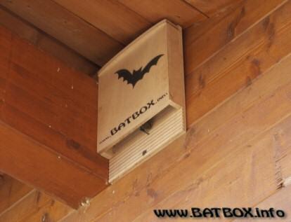 BATBOX.info - batbox colonizzata